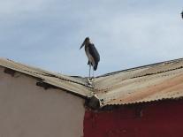 Crazy Big Bird